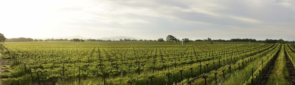 AgroPublic | Russian River Valley AVA scaled
