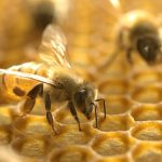 AgroPublic   012920 sm bee feat 1028x579 1