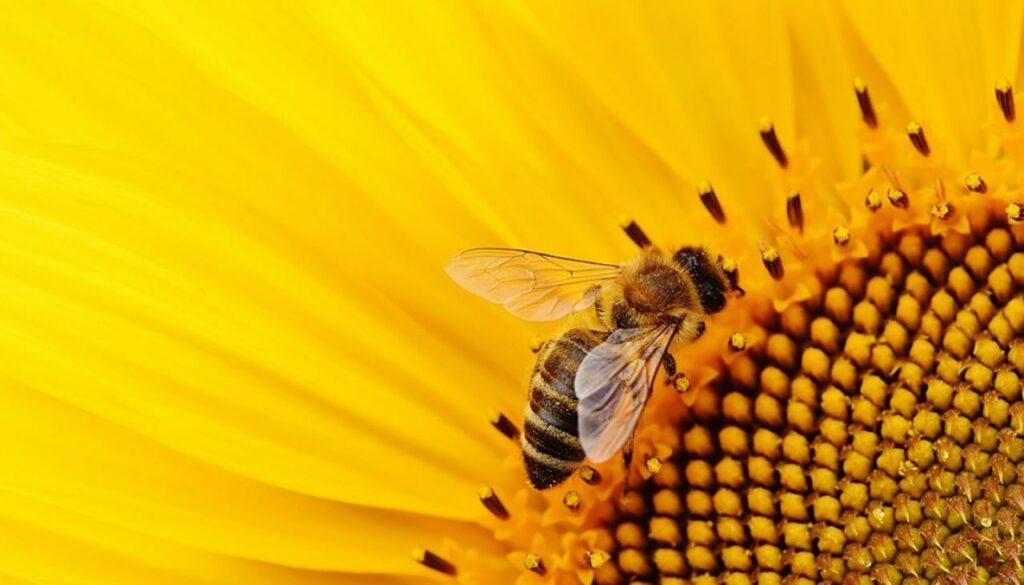 SUPPLIED bee apiculturenz 2052019 1120