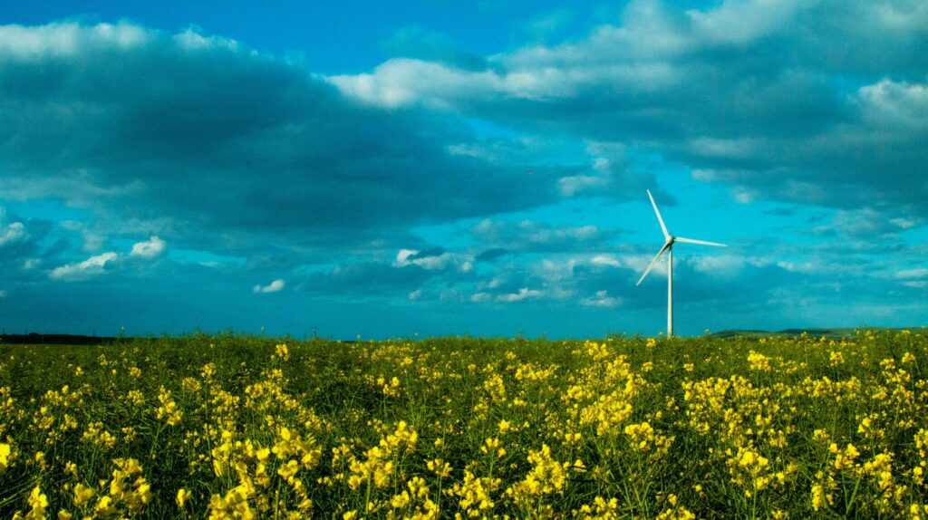 blue sky farming wind turbine yellow flowers 3637277 scaled