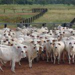 AgroPublic | herd of white goats on green grass field during daytime
