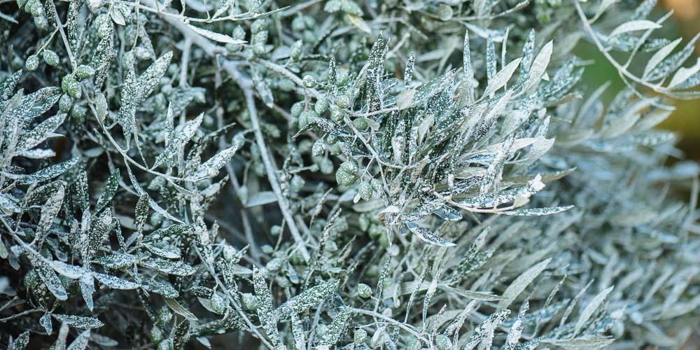 AgroPublic | mistikakipou kaolinis fisiko proion