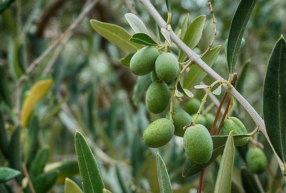 olives 2779863 960 720