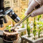 AgroPublic | plant breeding scientist CREDITShaiith Shutterstock 800x450 1