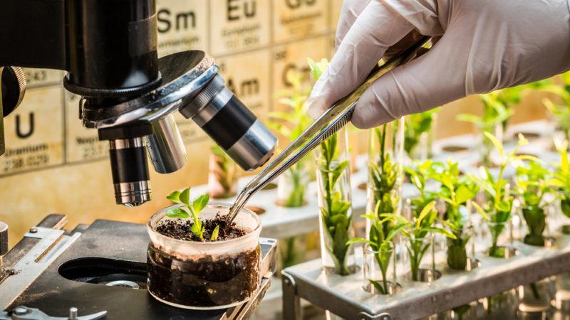 AgroPublic   plant breeding scientist CREDITShaiith Shutterstock 800x450 1