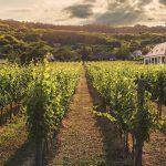AgroPublic | vine vineyard viticulture wine