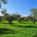 AgroPublic | elaiodentra 01 new