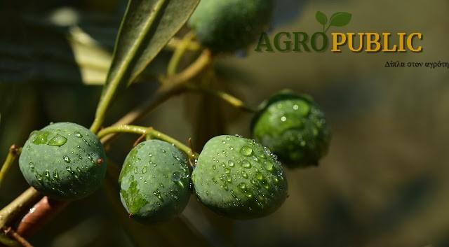 olives 3662753 1280