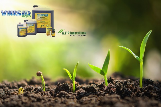 AgroPublic | plant seeding growing step concept agriculture 34152 1227 1