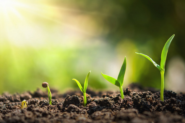 plant seeding growing step concept agriculture 34152 1227