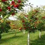 AgroPublic | 1586440551 0 oporofora1