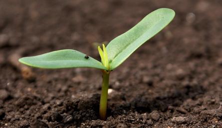Αυτή η εικόνα δεν έχει ιδιότητα alt. Το όνομα του αρχείου είναι Organic-Fertilizer-Industry-Analysis-by-Growth-Trends-Manufacturers-Top-key-Players.jpeg