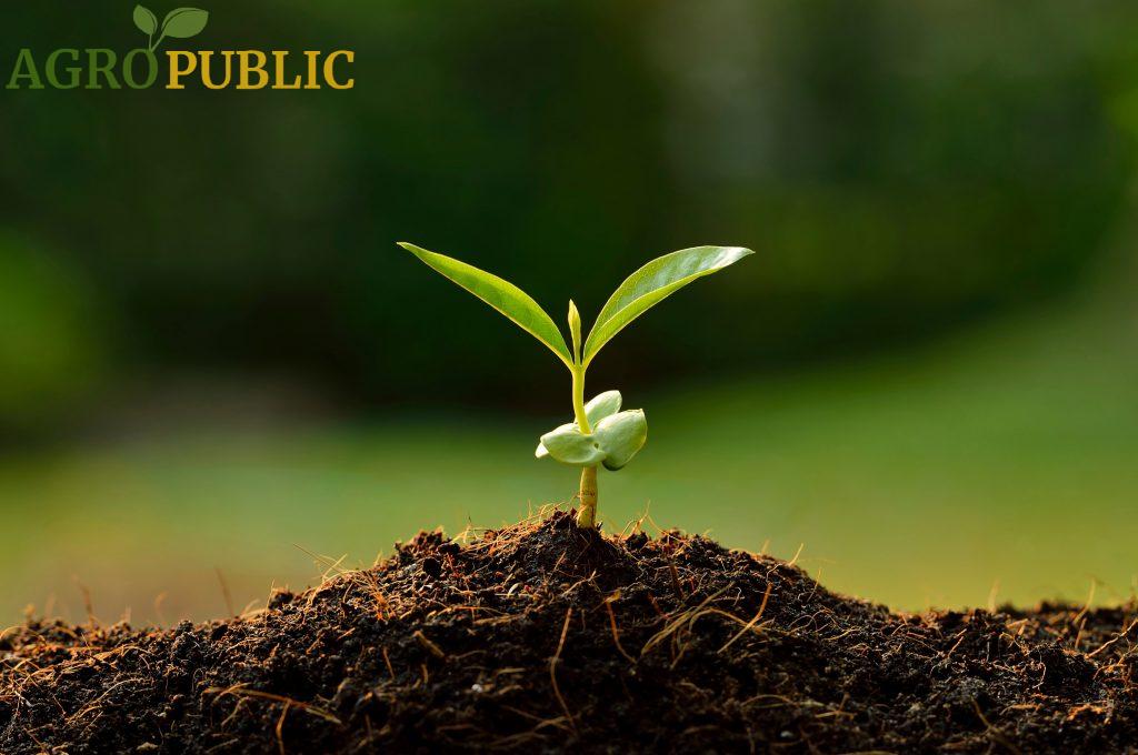 AgroPublic | agropublic plant 1
