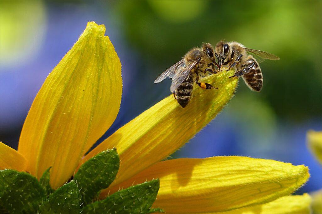 AgroPublic | bee 1575236 1920 3
