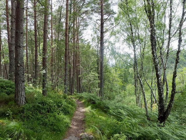 AgroPublic | forest 1