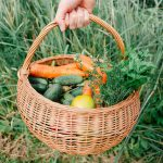 homegrown vegetables in a basket