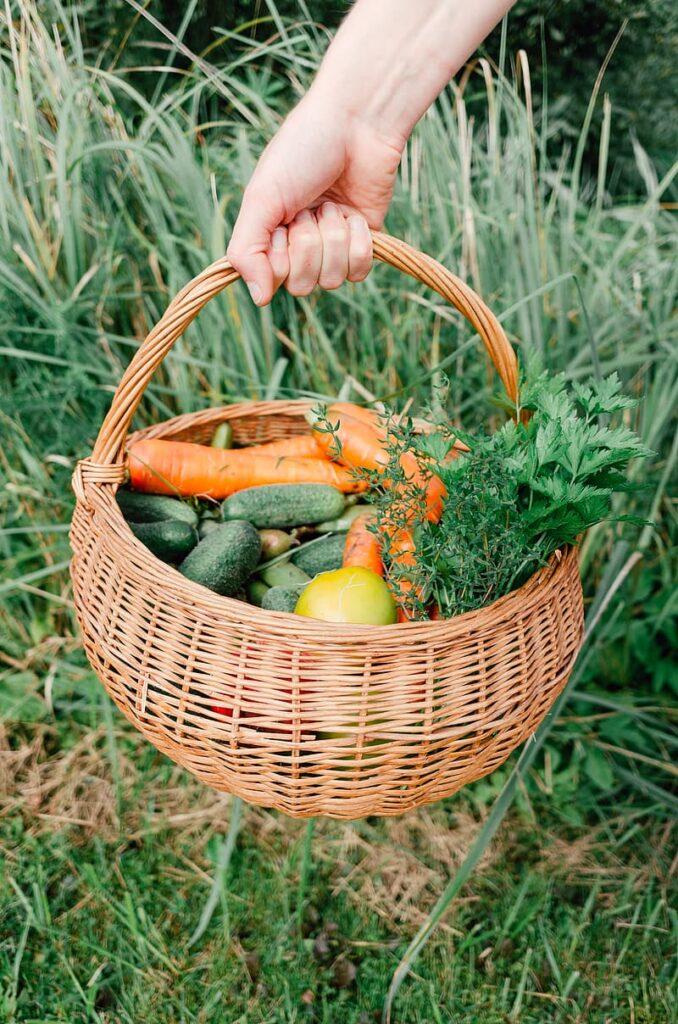 AgroPublic | homegrown vegetables in a basket