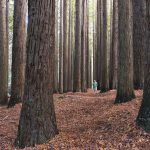 rainwood forest canada