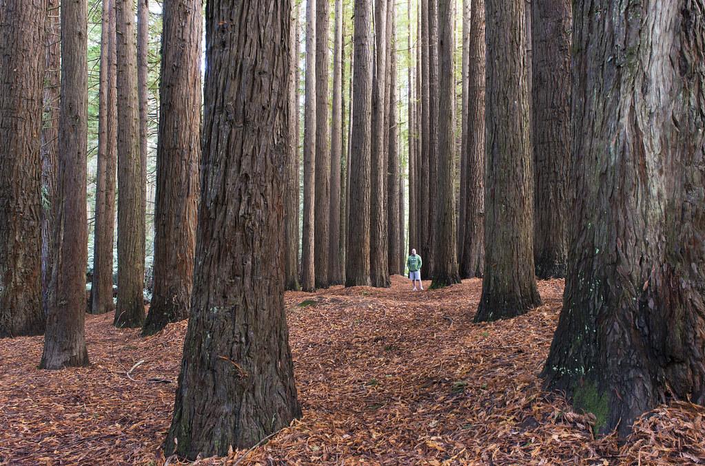 AgroPublic   rainwood forest canada