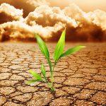 AgroPublic | soil pollution