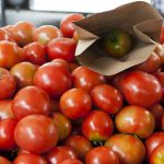 AgroPublic   tomates31