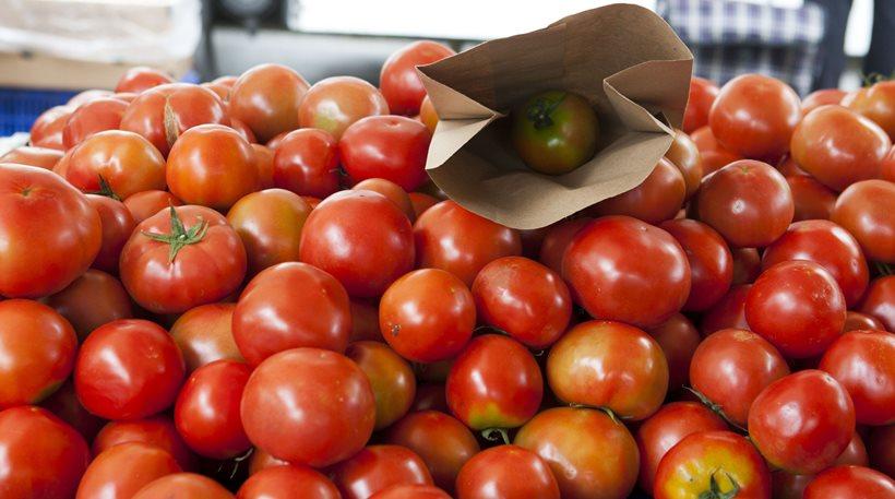 AgroPublic | tomates31