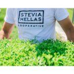 AgroPublic | 200809103650 stevia 1