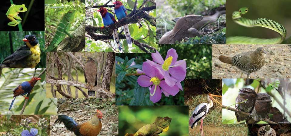 AgroPublic | Biodiversity1