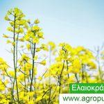 AgroPublic | img62559 1