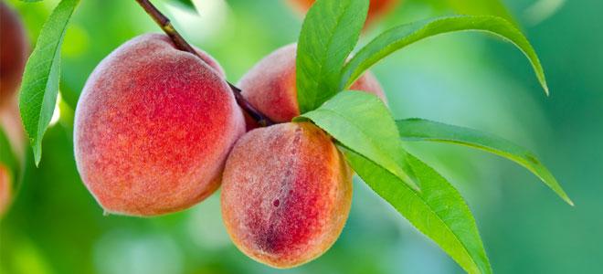 peach 660