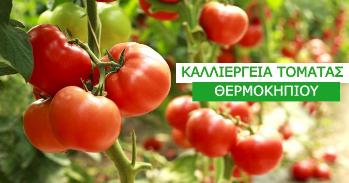AgroPublic | tomata 1