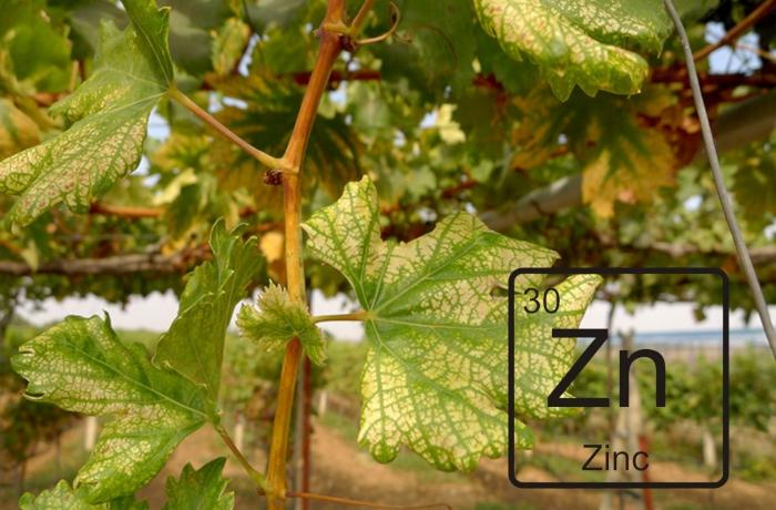 AgroPublic | znn