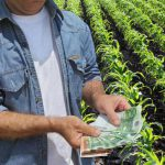 AgroPublic | agricultural concept farmer money field holding euro banknote green cultivated corn background 52749939 1