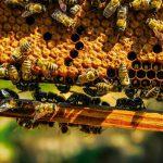 AgroPublic | bees 1818531 960 720