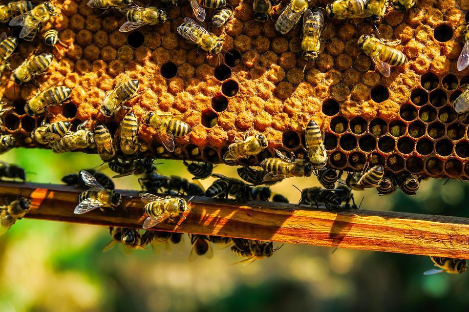 AgroPublic   bees 1818531 960 720