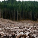 clearcutting forrest