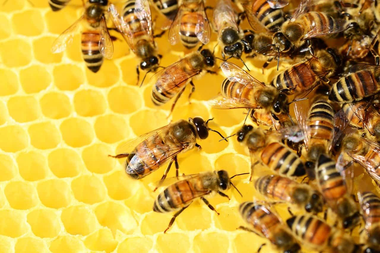 AgroPublic | honey bees 326337 1280