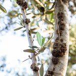 mistikakipou michaliskoulieris karkinosielias