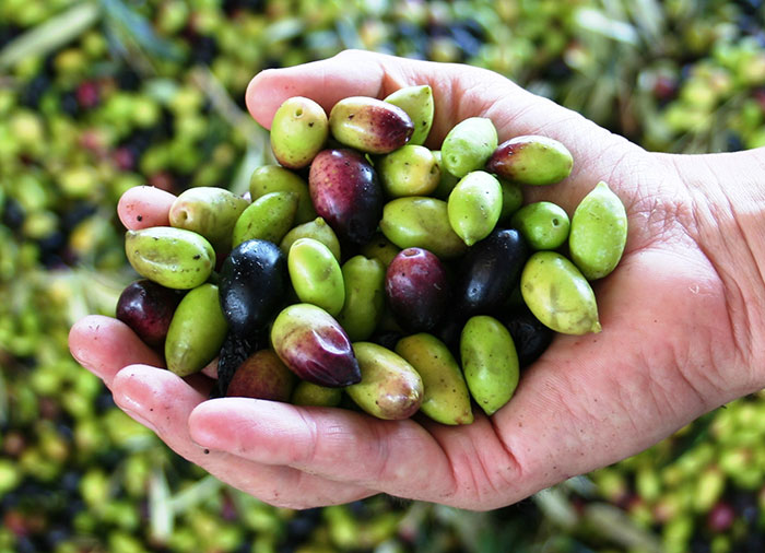 olives in hand