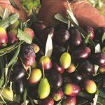 AgroPublic | doc 20121112 1018827 elies