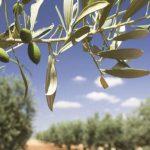 AgroPublic | elia elies elaionas 750x375 1