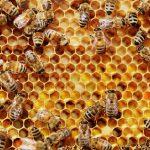 AgroPublic | honeycomb bees