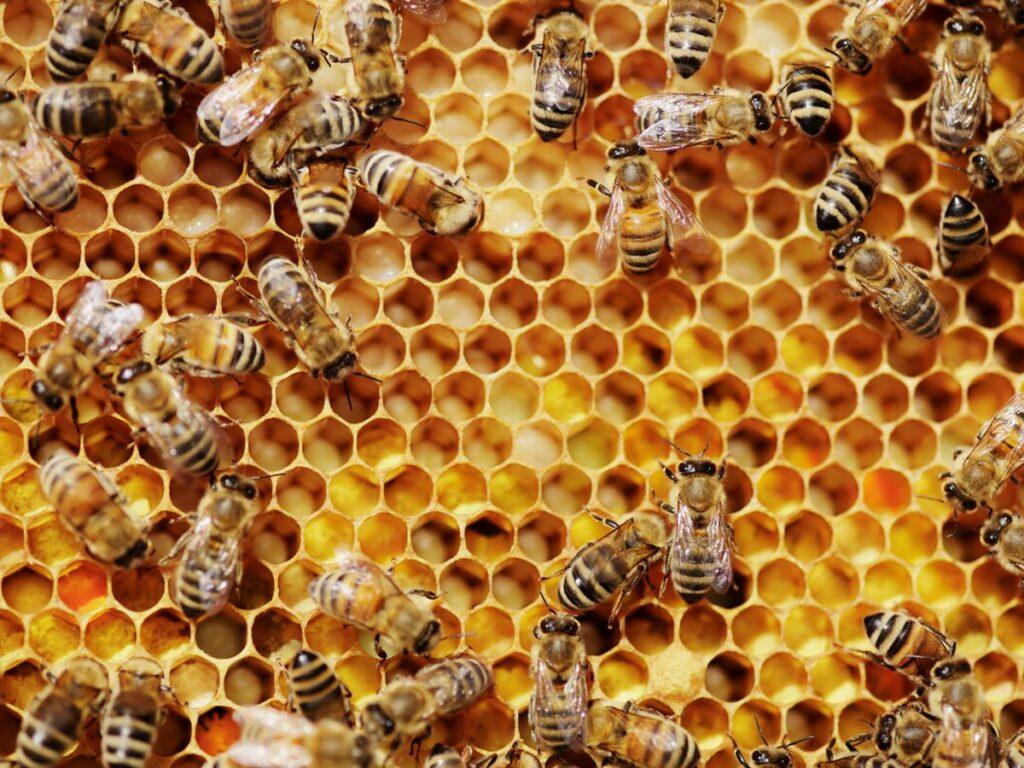 Μέλι: Πέφτει η τιμή, ανθίζει η νοθεία