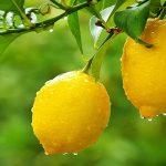 AgroPublic | lemonia