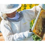 AgroPublic   photo 208546894 beekeeper working in the field of sunflowers
