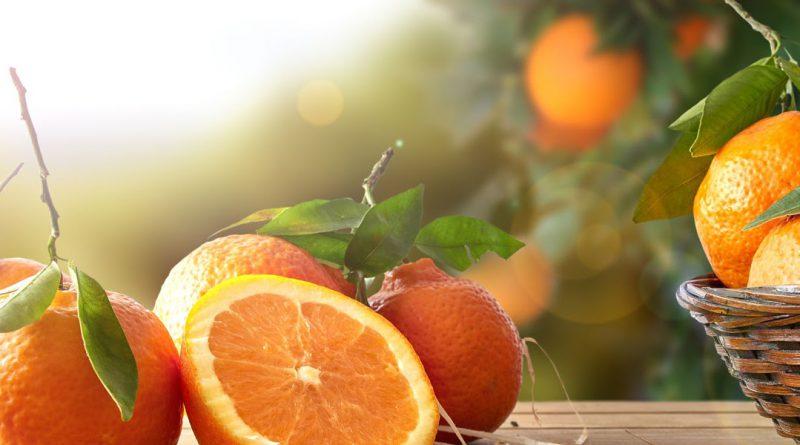 photo oranges 3