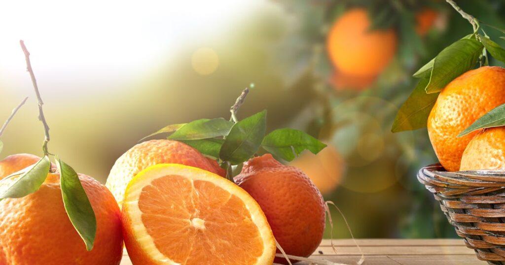 AgroPublic | photo oranges 3