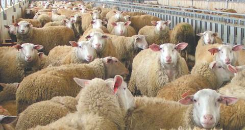 Ενημέρωση για τον καταρροϊκό πυρετό ζητούν οι κτηνοτρόφοι