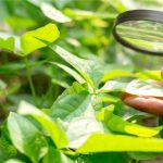 AgroPublic | rsz shutterstock 1058990816