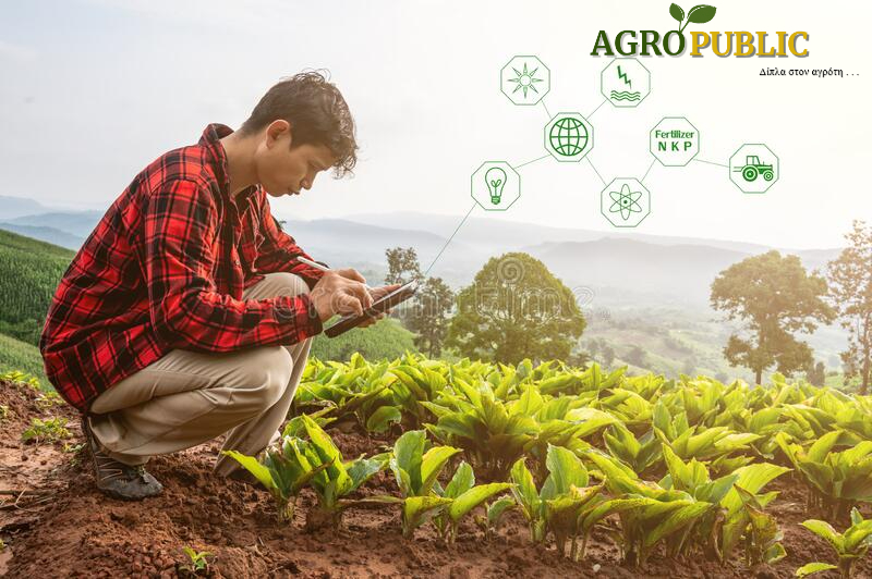 AgroPublic | smart farmer using technology app tablet checking grow analysis technology agriculture field farm smart farmer using 195715962 1